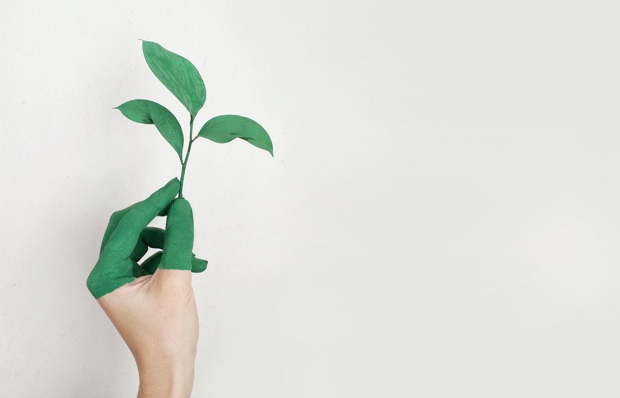 dłoń z zielonym listkiem